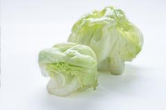 绿色卷心莴苣 免版税库存照片