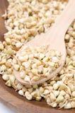 绿色发芽在木碗特写镜头的荞麦 免版税图库摄影