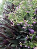 紫色口气 库存图片