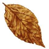 黄色古铜色金黄干燥叶子,葡萄酒元素 免版税库存图片