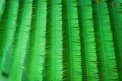 绿色叶子。 免版税库存照片
