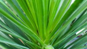 绿色叶子传播 免版税库存照片