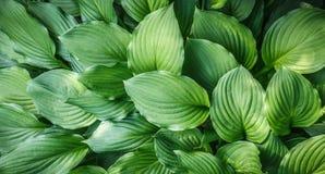 绿色叶子关闭自然本底 免版税库存图片
