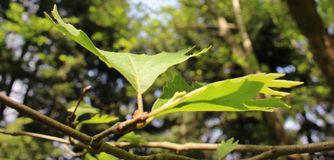绿色叶子几何在山 免版税库存图片