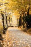 黄色叶子包括的路 免版税库存图片