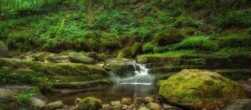 绿色叶子包围的小小河全景 库存图片
