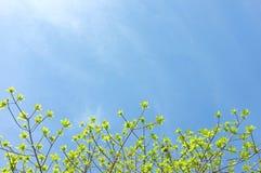 绿色叶子和太阳在天空 免版税库存照片