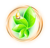 绿色叶子和油下落 皇族释放例证