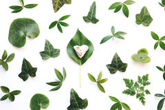 绿色叶子和石心脏 免版税图库摄影