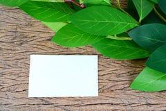 绿色叶子和空插件 图库摄影