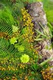 绿色叶子和篱笆条 图库摄影