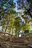 绿色叶子和蓝色skybackground 库存图片