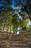 绿色叶子和蓝色skybackground 库存照片
