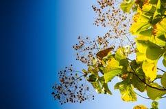 绿色叶子和蓝色skybackground 免版税库存照片
