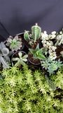绿色叶子和仙人掌和微型植物 库存图片