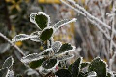 绿色叶子在冬天 库存图片