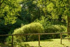 绿色叶子在城市公园 免版税图库摄影