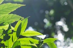 绿色叶子在早晨 免版税库存图片