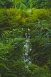 绿色叶子在森林里 免版税库存照片