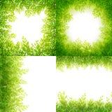 绿色叶子在白色隔绝的框架集合 10 eps 库存图片