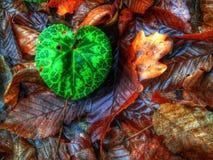 绿色叶子在秋天背景中 免版税库存图片