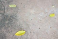 黄色叶子地面 库存照片