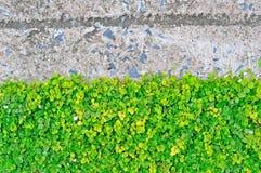绿色叶子墙壁 库存照片