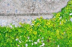 绿色叶子墙壁 库存图片