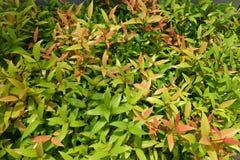 绿色叶子多片树荫  免版税库存照片