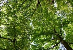 绿色叶子天空 免版税库存照片
