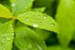 绿色叶子工厂 库存照片
