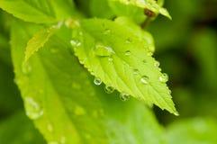 绿色叶子工厂 免版税库存照片