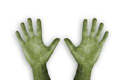 绿色叶子手 库存图片