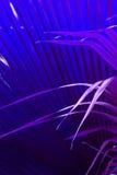 紫色叶子打翻反对在抽象照片的蓝色矮棕榈条叶子 免版税库存图片
