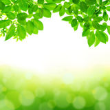 绿色叶子摘要背景 免版税库存图片