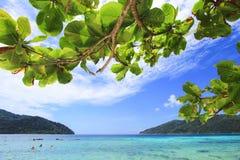 绿色叶子有海背景 库存图片