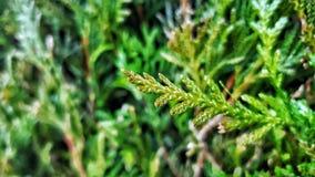 绿色叶子本质 免版税库存图片
