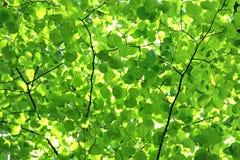 绿色叶子机盖,背景 免版税库存照片