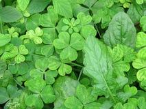绿色叶子样式 免版税库存图片