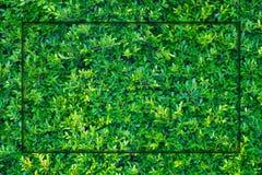 绿色叶子框架背景,在墙壁上的植物 库存照片