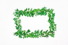 绿色叶子框架 在视图之上 免版税图库摄影