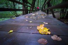 黄色叶子桥梁 图库摄影