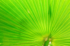 绿色叶子棕榈树 库存照片