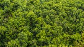绿色叶子森林背景 库存图片