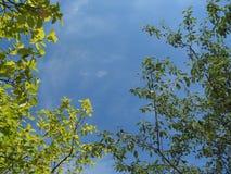 绿色叶子火焰在蓝天背景的 免版税库存图片