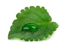 绿色叶子用水下降宏指令 免版税库存照片