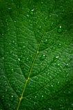 绿色叶子用水滴下,构造,宏指令 免版税库存照片