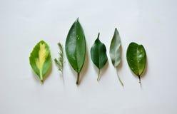 绿色叶子的不同的类型 免版税库存照片