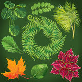 绿色叶子的收集 向量 库存图片