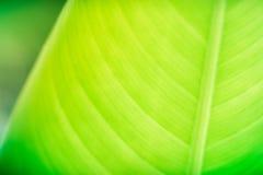 绿色叶子的本质 免版税库存图片